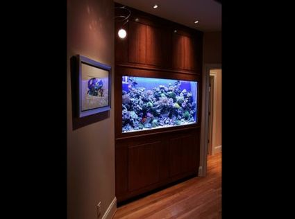 Richmond Aquariums Fish Tank Maintenance in Richmond VA